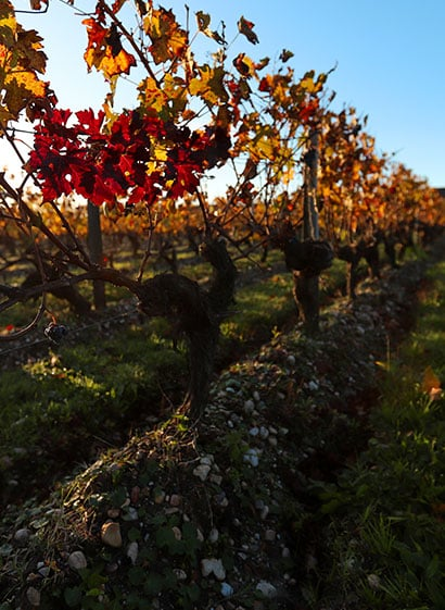 vignobles bordelais